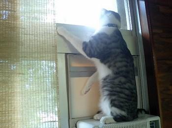 peepingkoko.jpg